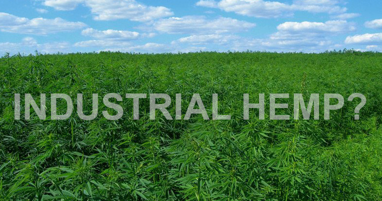 What Is Industrial Hemp