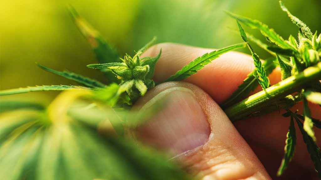 Where to Find Industrial Hemp Buyers